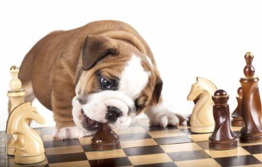 Dog is a great chess player