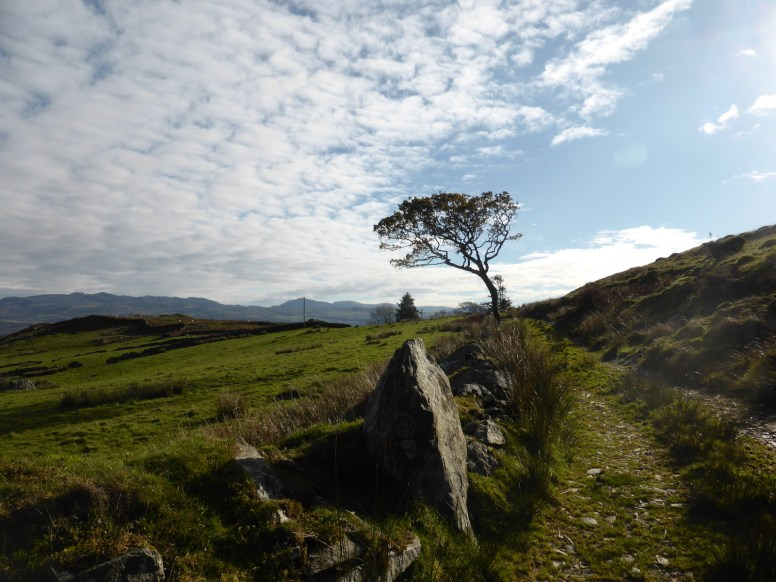 rock, tree and mackerel sky