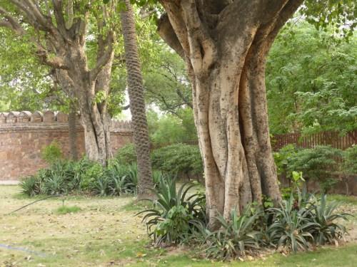 expressive tree trunks in park