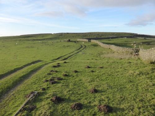 track and molehills across green field