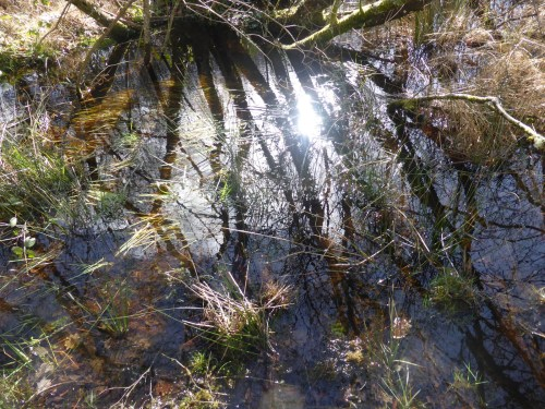 branches and reflections on surface water