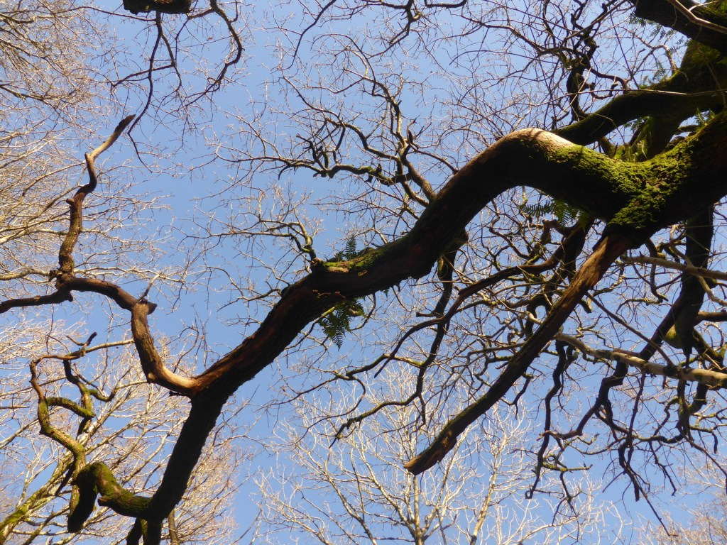 looking up at branches against blue sky