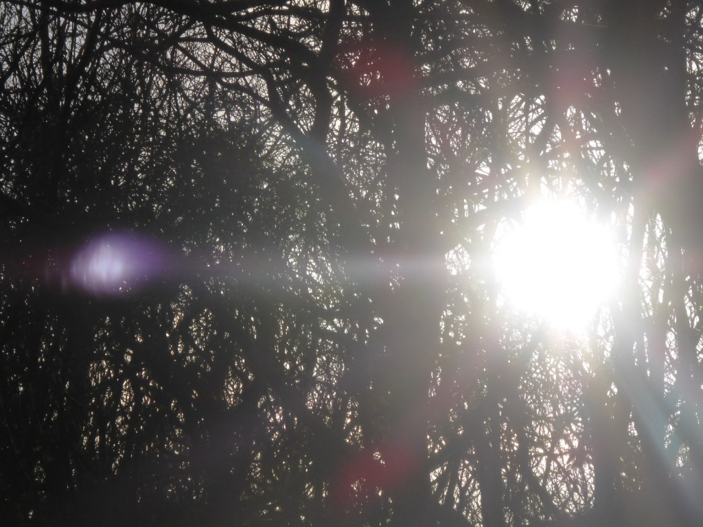 sunspots through thicket