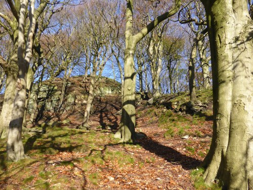 wooded hillside with stripey shadows