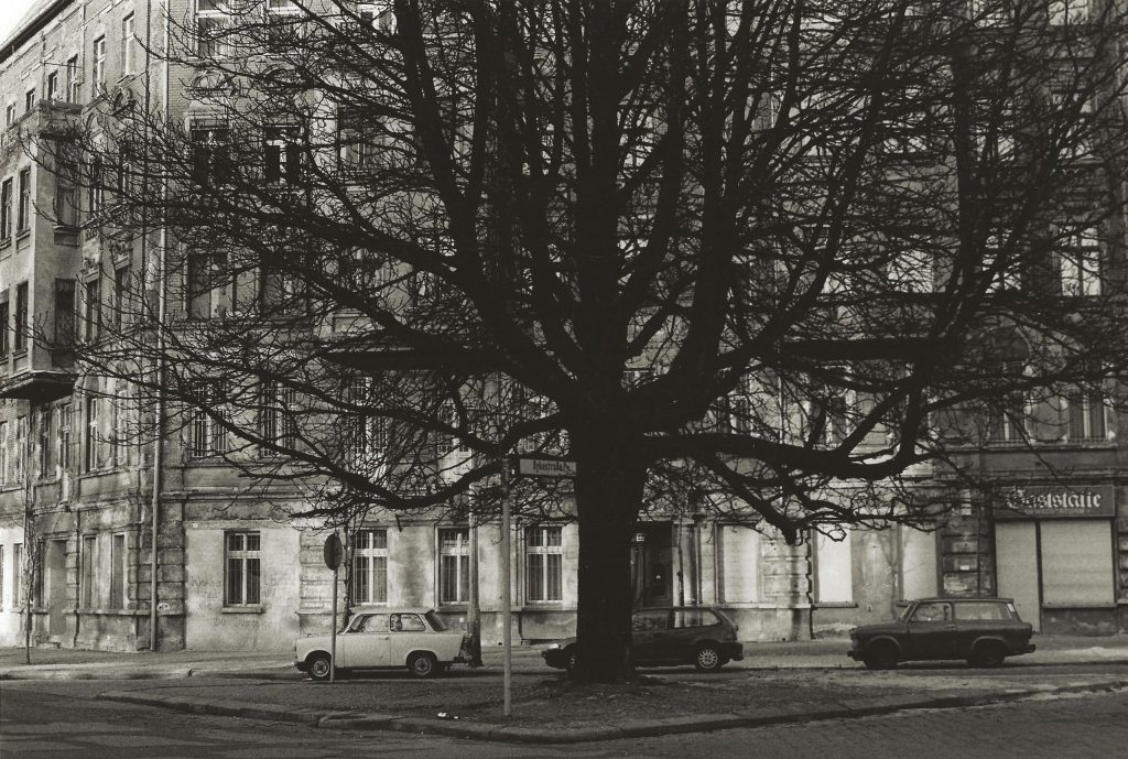 tree in square