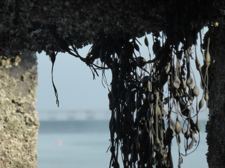 weed hanging from pier