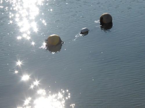 floats and sun stars