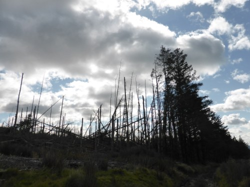 cut tree devastation skyline silhouette