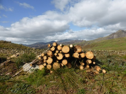 cut stacked logs catch the sun