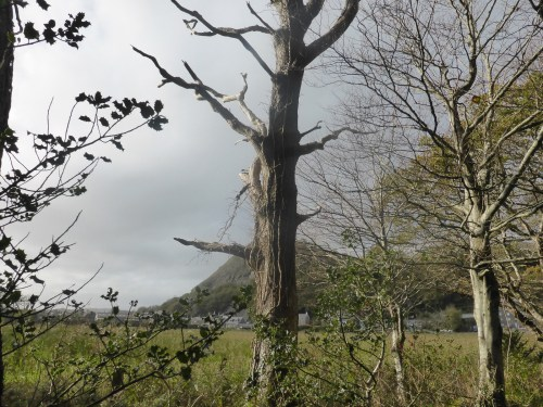 tree obscures cliff
