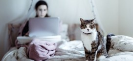 Survival Guide For Cat Parents Who Work At Home