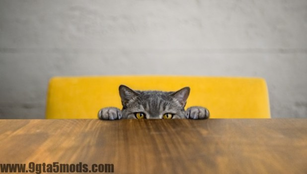 5 Amazing–And Often Bizarre–Cat Facts For National Trivia Day
