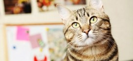 Do You Know Cats? Find Out With 10 More Random, Amazing Cat Facts!