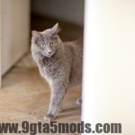 Here, Kitty Kitty! How to Teach Your Cat to Come When Called