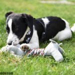 How can I socialise my puppy during the COVID-19 pandemic?