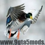 How many ducks and quail are wounded due to recreational hunting?