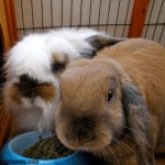 Why is rabbit bonding important and how is it done?