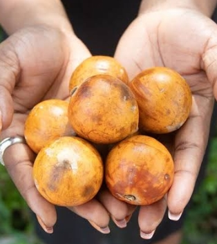 Horror Stories told about ukwu udara tree