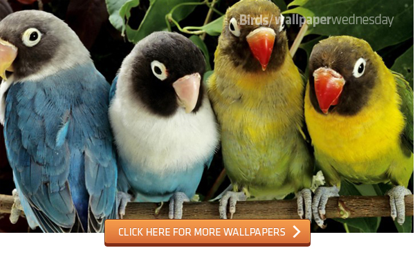18 Beautiful Birds Desktop Wallpapers