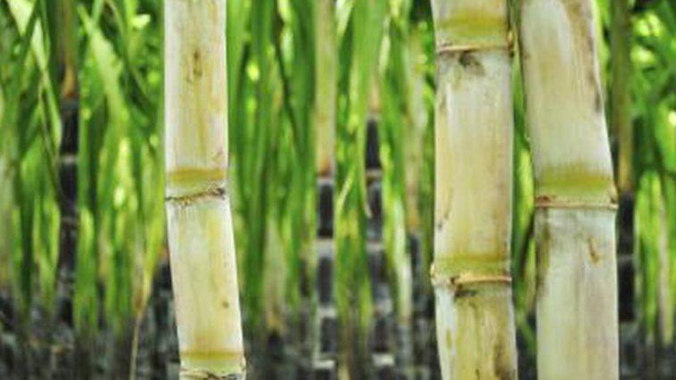 health-benefits-sugar-cane