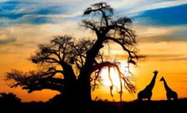 Best Tourist Destinations in Africa