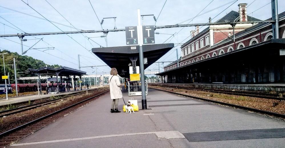 El problema de las mascotas en los transportes públicos no son los animales, son sus dueños. (1/2)