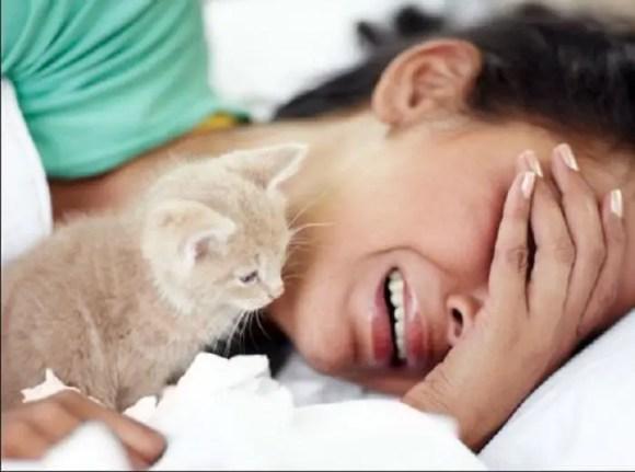 علاج الإصابة بداء القطط للحامل