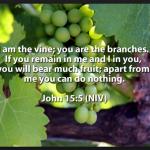 Jesus Christ is the true vine