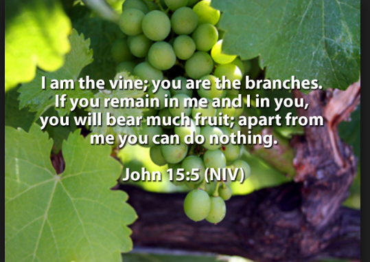 Jesus Christ is the true vine