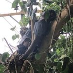 Police Officer Electrocuted On The Tree In Abuja