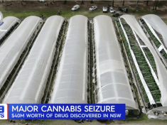 In total, more than 13,000 cannabis plants were seized. (NSW Police)