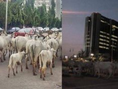 Herdsmen, cows take over CBN Headquarters in Abuja. - Report