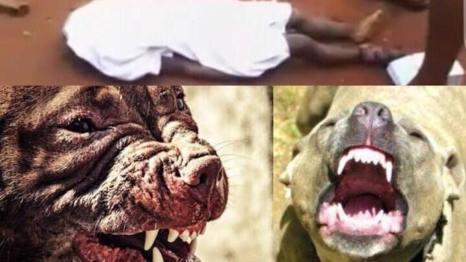 HORROR IN NTEJE, ANAMBRA: HOW SCHOOL OWNER'S TEN DOGS DEVOURED 2-YEAR-OLD CHILD