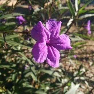 5-flower-2