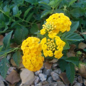 5-yellow