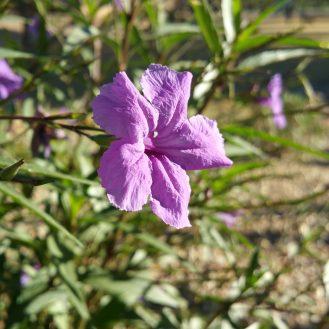 note-flower-2