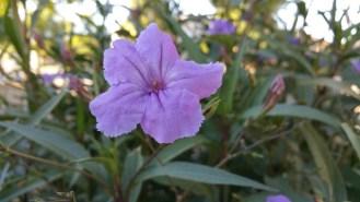 note-flower