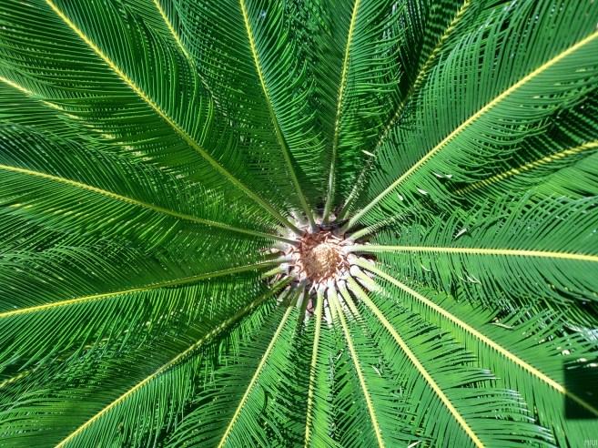 Plant2_HDR
