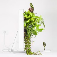plant_your_mac_imacwallplant_monsieur_plant_2016_3_instagram