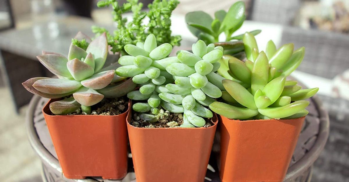Decorate your space: 5-pack of potted succulent plants at $14 Prime shipped (26% off) + more - 9to5Toys