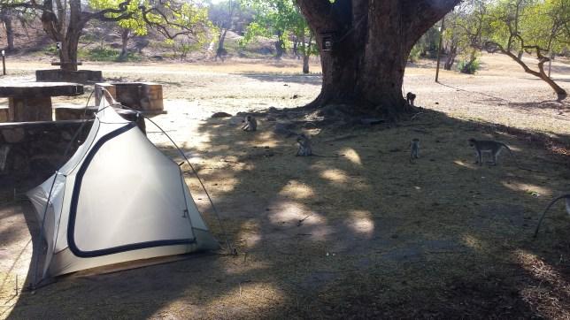 Great Zimbabwe campsite