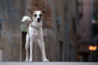 Venetian doggie
