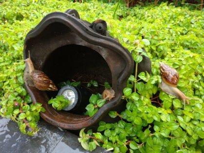 Monster snails