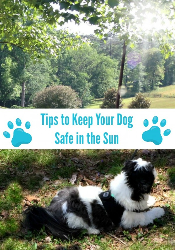 5 Tips to keep your dog safe in the sun this spring #RememberBeyond