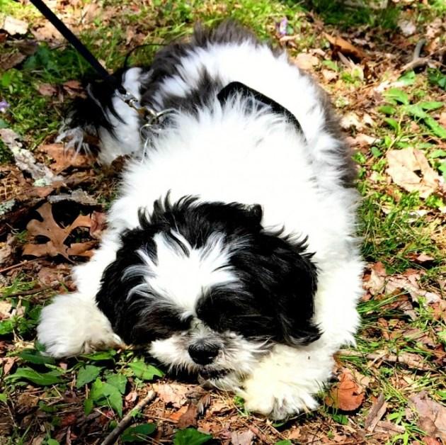 Ways to keep your dog safe - let you dog take rest breaks...