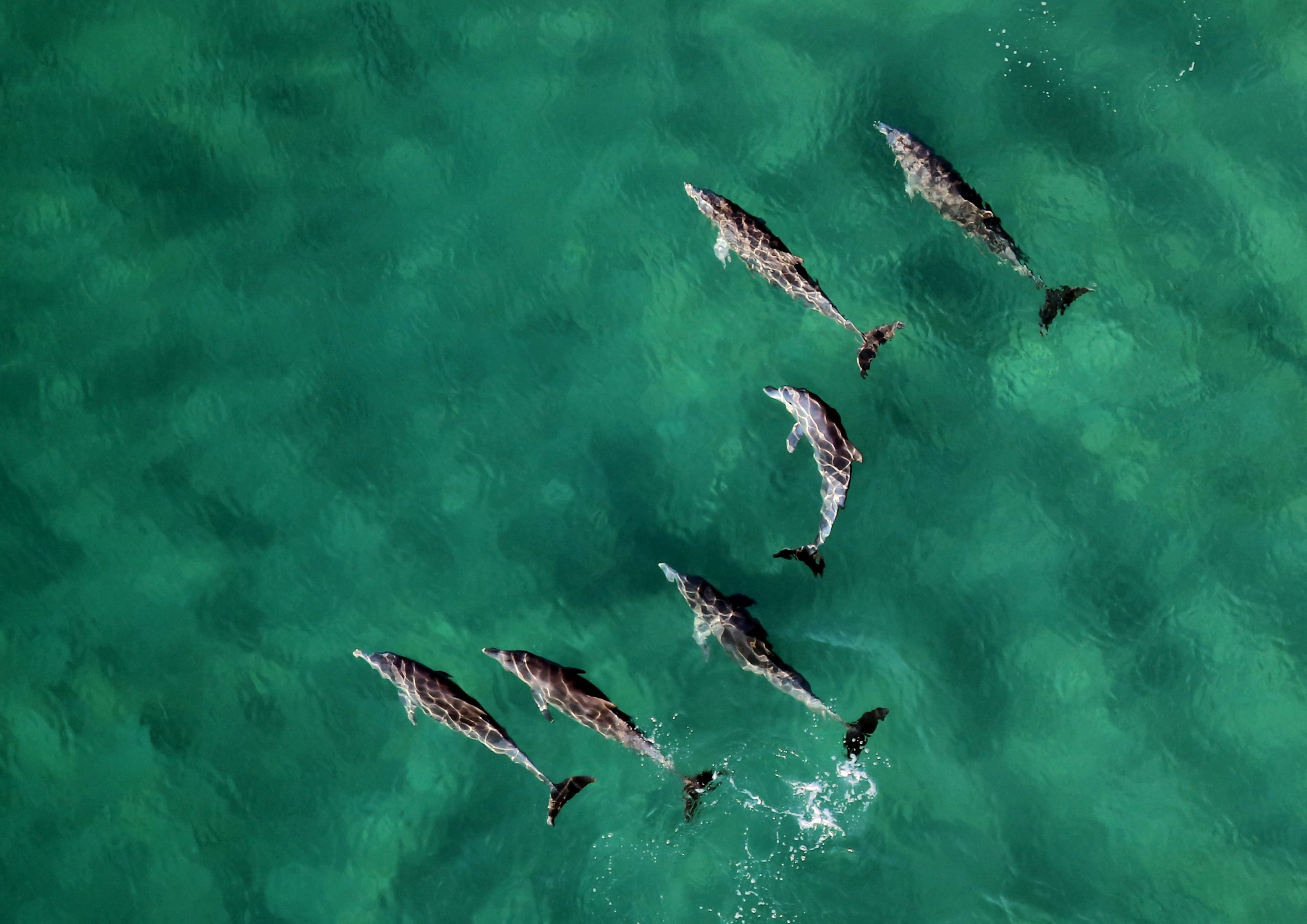 Dolphin Strand Feeding: Remarkable Behavior