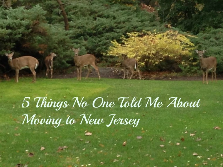 5 Things Moving to NJ