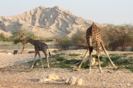 The Al Ain Animal park