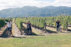 wine tours by bike