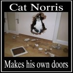 Cat Norris Makes His Doors